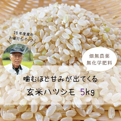ハツシモ玄米5kg(29年産)ー農薬・化学肥料・除草剤不使用ー
