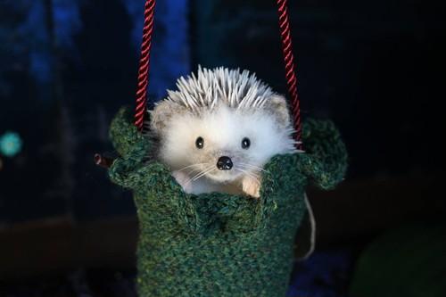 Dangling Hedgehog ぶらぶらハリネズミさん