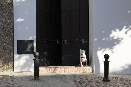 【10枚限定・額装写真】アンダルシアの片耳が黒い犬