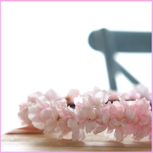さくらピンク  花冠