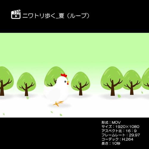 ニワトリ歩く_夏(ループ)