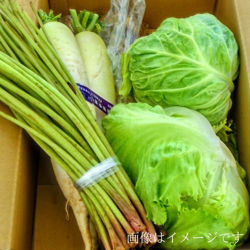 送料無料 4月の朝採り直売野菜セット およそ5点セット 毎週土曜日発送予定