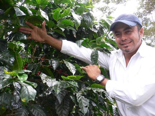 NICARAGUA Finca Buenos Aires  (ニカラグア ブエノスアイレス農園) 100g