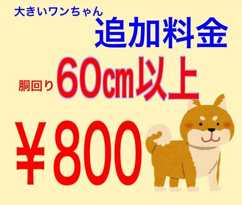 大きいワンちゃん追加料金(60~