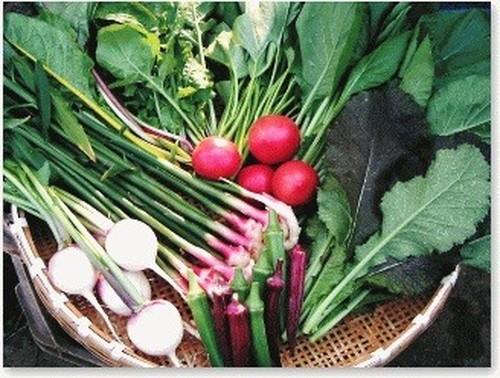 採りたての野菜を厳選して6品セレクト【3回分】