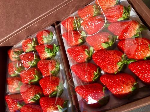 大粒!!完熟☆濃く甘いちご おいCベリー 24粒入