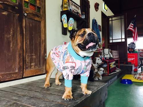 atomic柄モックネックT EnglishBulldog