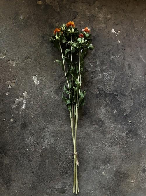 ベニバナ 紅花のドライフラワー 束