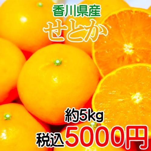 香川県産 せとか 5kg
