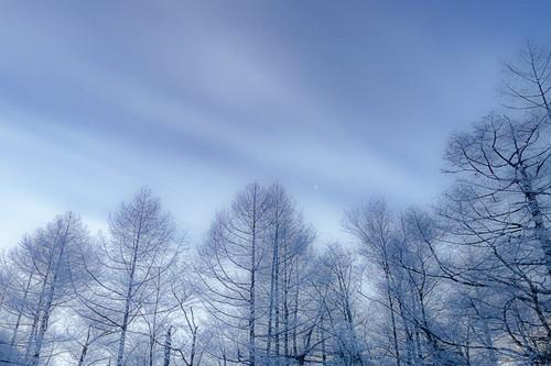霧氷林と空