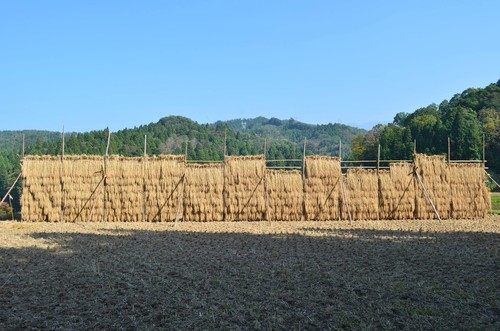T様専用 環境保全米7分つき10kg+はさがけ玄米5kg