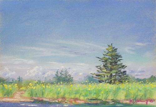 NO.61「黄色のコスモス・9月」
