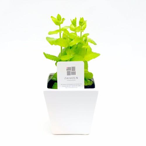 【無農薬ハーブセット】アップルミント