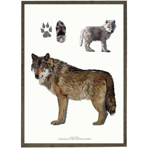 アート ポスター A4 サイズ KOUSTRUP & CO. - Wolf オオカミ