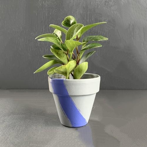 ポットグリーン ペペロミア 3号鉢