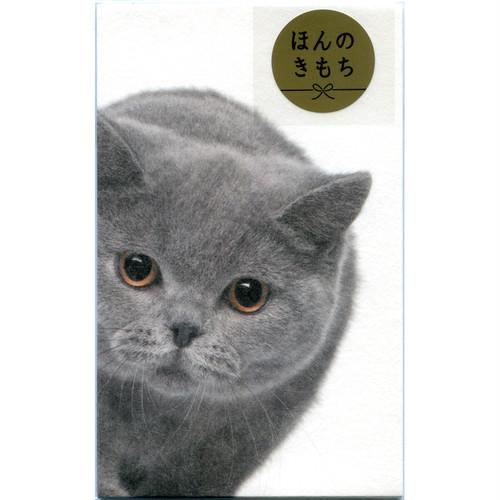 猫ぽち袋(ひょっこりニャンコ)グレーネコ