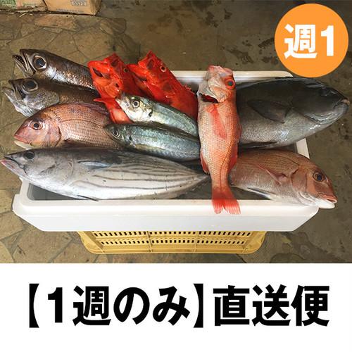紀州・朝どれ直送便【1回のみコース】