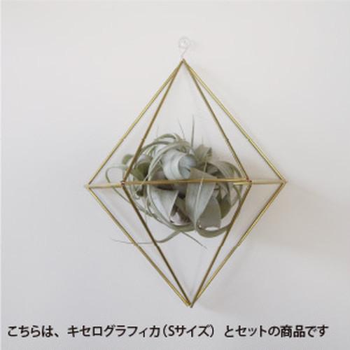 [手作りキット]壁掛けタイプ真鍮のヒンメリとチランジアのセット【Lサイズ】