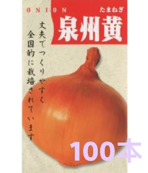 【玉ねぎ苗】泉州黄 (100本)