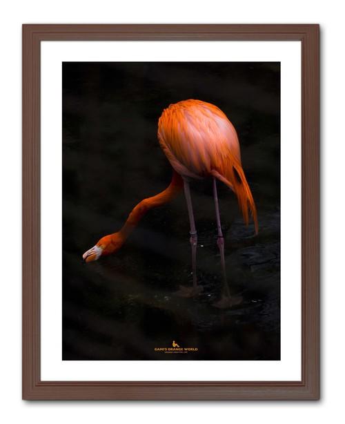 STRAY FLAMINGO(迷えるフラミンゴ)