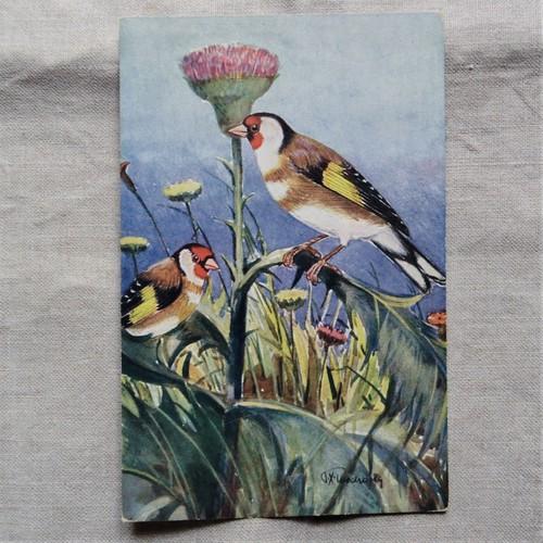 #エア蚤の市 鳥の絵のポストカード①