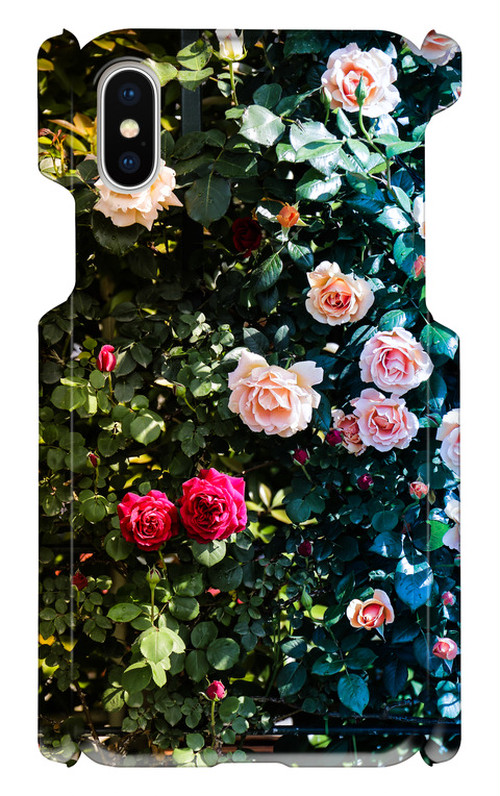薔薇の二面性(iPhoneX)