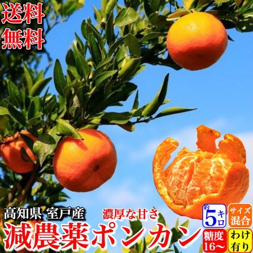 減農薬 ぽんかん 約5kg 訳あり品 サイズ混合 糖度16度 高知県 室戸産 澤村さんの完熟ポンカン  送料無料