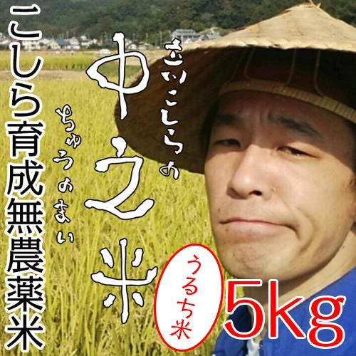 ※うるち米5kg こしら育成無農薬米 立川こしらの中之米(ちゅうのまい)