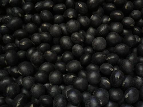 光黒大豆1kg(令和元年度産)