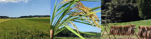 【無農薬・無肥料】自然循環米 玄米(白米・分付きも指定可能)