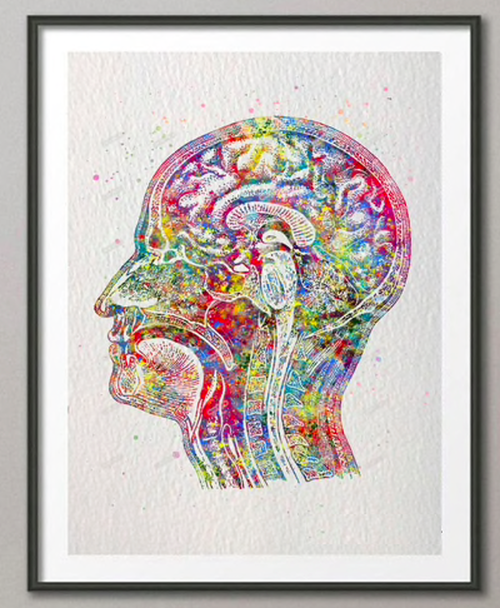 解剖学アート 脳 A4サイズ