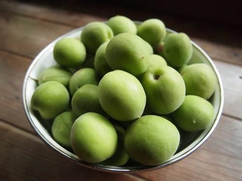 5キロセット【無農薬・無肥料】福岡県糸島市の梅