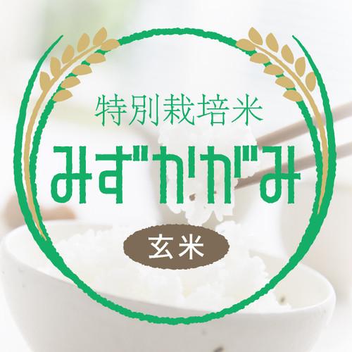 特別栽培米 みずかがみ 玄米30kg〈1週間以内で発送〉