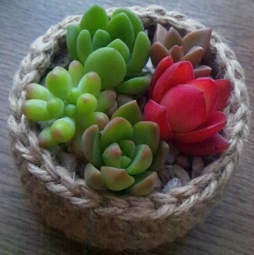 多肉植物寄植え ミニアレンジ