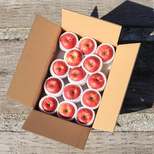 リンゴ「サンふじ」10kg入 40〜44個(S)詰め