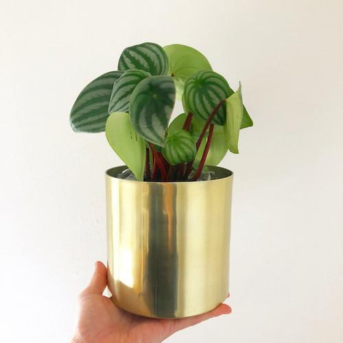 Raakel Cylinder φ13cm gold 植木鉢カバー