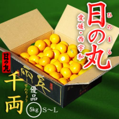 【予約】愛媛県西宇和産みかん「日の丸 千両」優品5kg S~L
