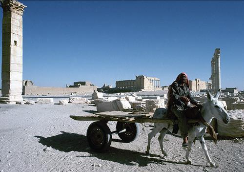 シリアのパルミラ遺跡  ロバの荷車