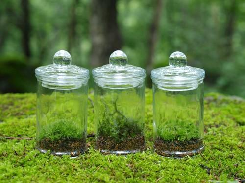 【苔テラリウム】小さなコケの森 マイクロポット オススメ3種set