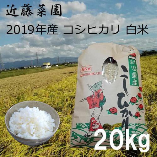2019年 新潟県産 令和1年産 コシヒカリ 白米 20kg 近藤菜園