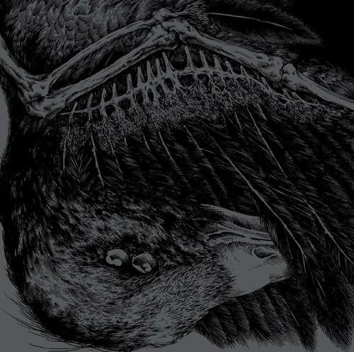 """BROILER / TRIKORONA """"SPLIT BIRD"""""""