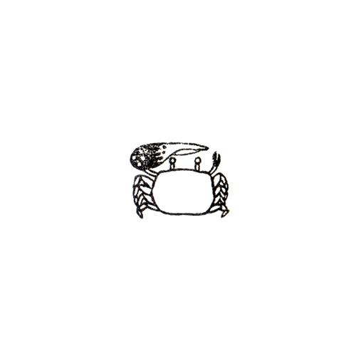 シオマネキ Fiddler  crab