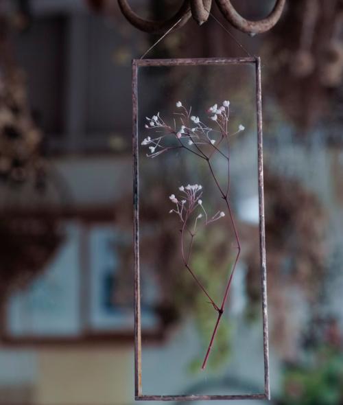 植物絵画:プリザーブドフラワー『かすみ草 ピンク』
