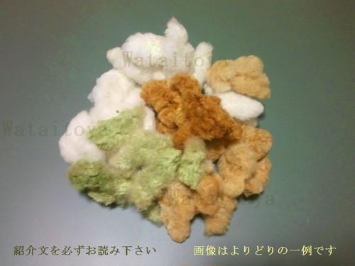 実綿 5品種詰合せ 約50g 無染色・自家自然栽培綿
