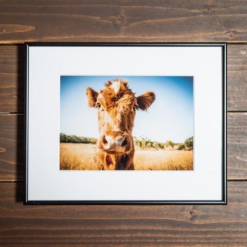 Photo Frame A3(牛)