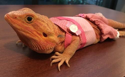 ピンクの水玉の部屋着 M