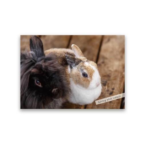 好きな写真でつくるフォトポスター「1shot rabbit」(横)
