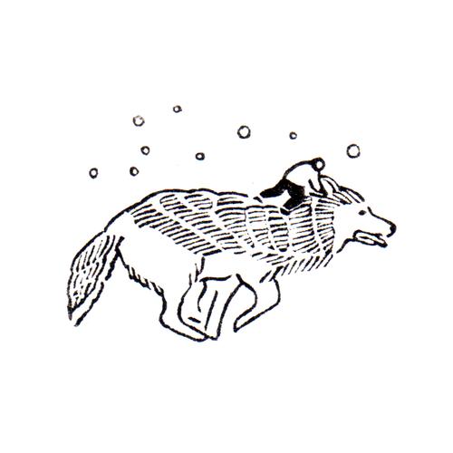 ハイイロオオカミ Canis Lupus