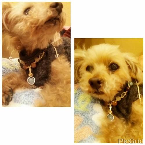 オーダーパワーストーン:ペット用首飾り 【ルビー】(神仏の加護・氣入り)