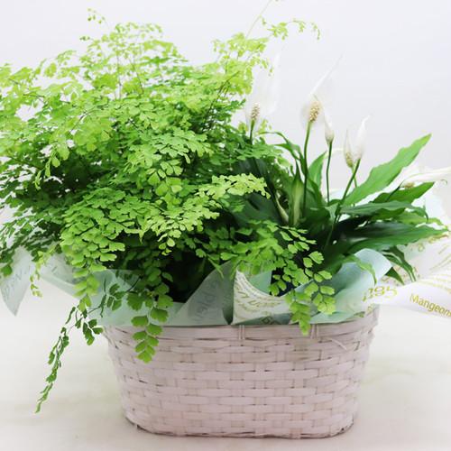 【夏ギフト】Plants Basket 2個入